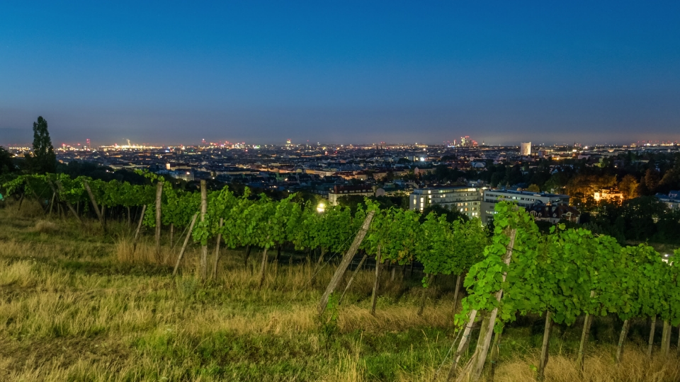 Wien vineyard sunrise - 01